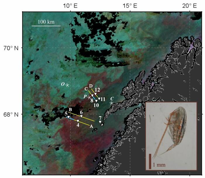(Satellittbilde: Basedow et al. 2019, data for satelittbildet ble gjort tilgjengelig av NEODAAS)
