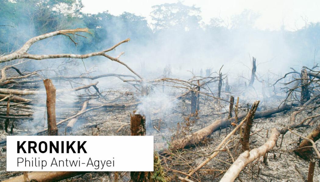 – Landene i Vest-Afrika må umiddelbart innføre tiltak mot avskoging. i de siste to tiårene har store skogsområder blitt ødelagt, skriver Phili Antwi-Agyei. Bildet er fra Golaregnskogen i Sierra Leon i Vest-Afrika. (Foto: Mary Evans Picture)
