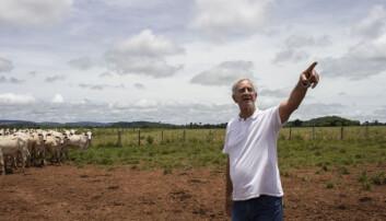 Regnskogen i Brasil hugges fortsatt ned og gjøres om til beitemark. Hvorfor er det så vanskelig å stanse det?