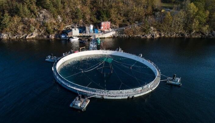 Lukket merd i sjø fra Aquaform Equipment som så langt viser positive resultater i tester. Den kan på det meste romme 1 million laks opp til en kilo. (Foto: Magne Langåker/Aquafarm)