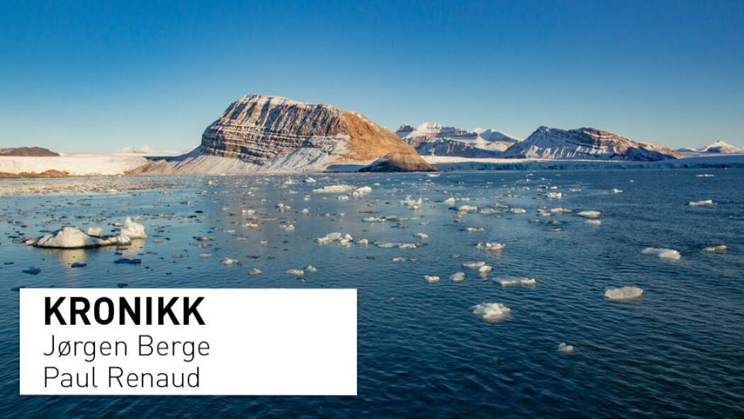 Hvorfor ble det tatt så få torsk i fjordene på Svalbard i år? Kronikkforfatterne har noen forslag. (Foto: Are Føli / NTB scanpix)