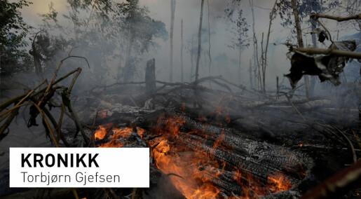 Tapet av intakt regnskog er en karbonbombe