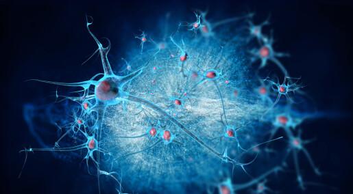 Testosteron former hjernen i fosterstadiet