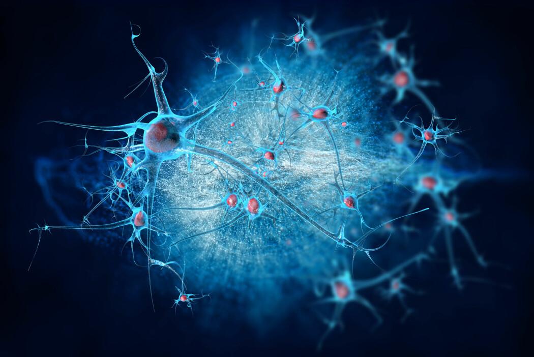 – Testosteron spiller også inn i den kompliserte utviklingen av hjernen i fosterstadiet, som har betydning for utvikling av kjønnsidentitet og evnen til å håndtere stress senere i livet, skriver Sara Tellefsen og Marianne Brattgjerd.