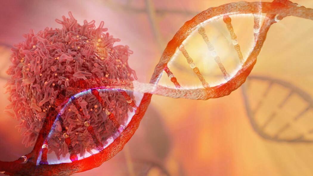 – Når arvematerialet i en celle blir skadet, for eksempel etter behandling med cellegift, vil DNA-smultringen tilkalle andre proteiner som deltar i å reparere skaden. Det er her det nye legemiddelet kommer inn, skriver Birgit Drejer Ringstad.
