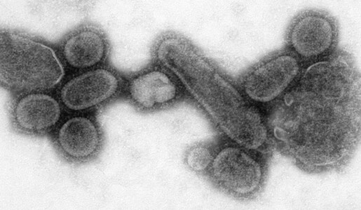 Hva er egentlig et virus?