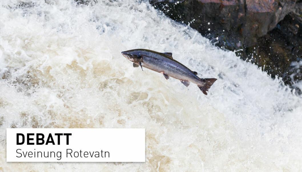 Noreg er i dag eit av få land i verda som tillèt fiske av laks i sjøen. Avgrensing av fisket er eit av fleire tiltak vi kan gjere for å ta vare på dei norske villaksbestandane for framtidige generasjonar, skriv Sveinung Rotevatn.