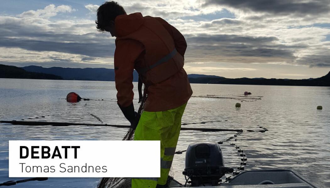 Den eneste måten det norske folk kan få tilgang til villaks på er fra et sjølaksefiske, skriver Tomas Sandes.