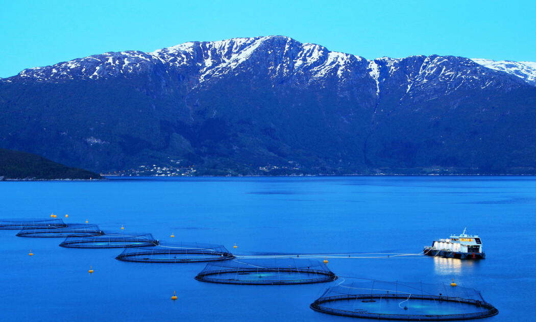 Portalen Bærekraft i havbruk gir ikke et overordnet rødt eller grønt lys til bransjen, men den presenterer tallene saklig og nøkternt, og det blir opp til leseren å bruke dem, skriver Eirik Mikkelsen.