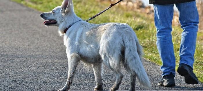 Forskning viser at halsbånd kan skade hunden