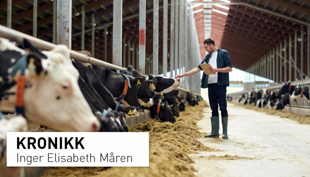 EU vil at europeisk mat skal sette global standard for bærekraft. Her har EU en vei å gå.  Over 50 prosent av voksne i EU er overvektige. I tillegg subsidierer EU miljø- og klimaødeleggende landbruk, skriver Inger Elisabeth Måren.
