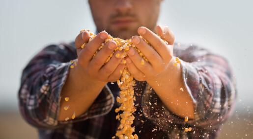 Kan fremtidens matkorn dyrkes i prøverør istedenfor på åkeren?