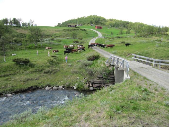 Fjellskogen har tradisjonelt vore hardast nytta naturtypen i Noreg til beiting og utmarksslått. På Spellmovollen i Vangrøftdalen i Os i Østerdalen er det enda seterdrift