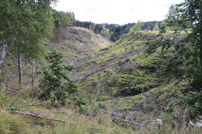 Ved rydding av skog kan det gå fort å tilbakeføre raviner til god beitestand. Her kan du sjå ein ravine som er rydda for beite i Nannestad.