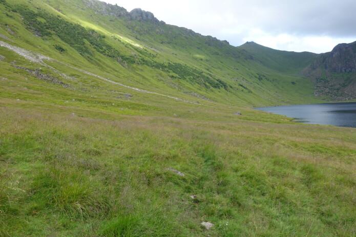 Fjord- og dalsider er stadvis godt kultiverte og grasrike, men mykje ligg no til attgroing med bregner og høge urter, og sidan skog. Dette er ein frodig og grasrik skredmark i Bødalen på Vestvågøya i Lofoten.