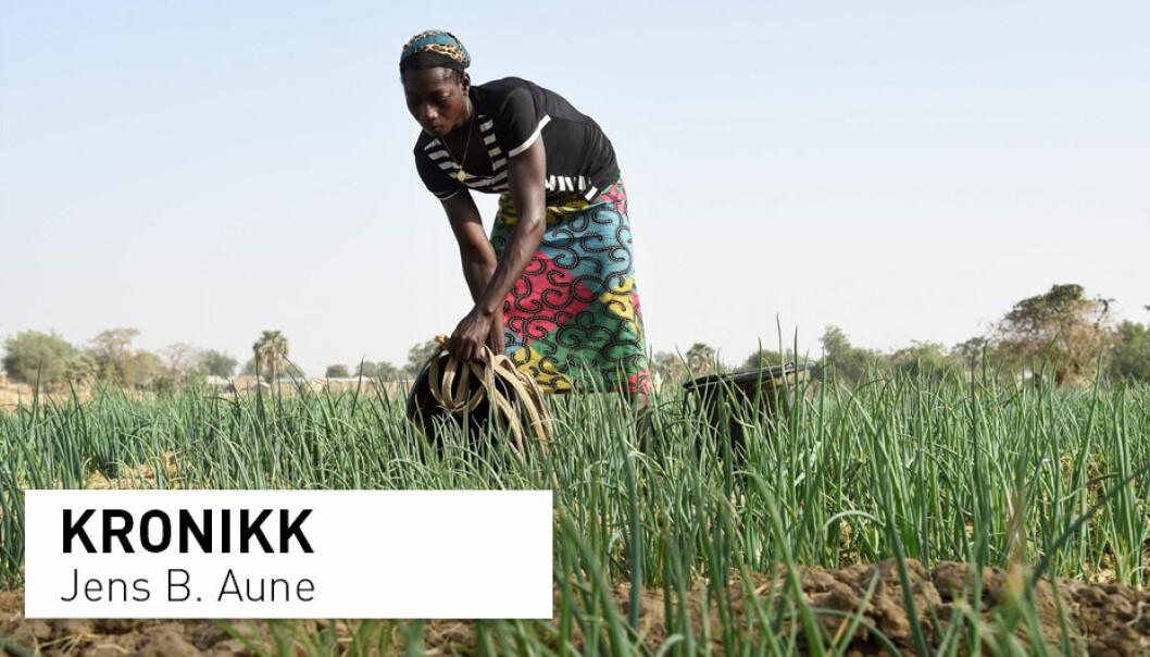 – De fleste ungdommer i Afrika ønsker å gå ut av landbruket fordi de forbinder det med mye slit og dårlig lønnsomhet. Mekanisering og digitalisering er derfor viktig for å gjøre landbruk mer attraktivt for ungdommen, mener Jens B. Aune.