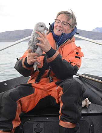 – I Arktis er havhest blitt en indikator for plast i havet, skriver Geir Wing Gabrielsen. Her er han avbildet med en havhest.