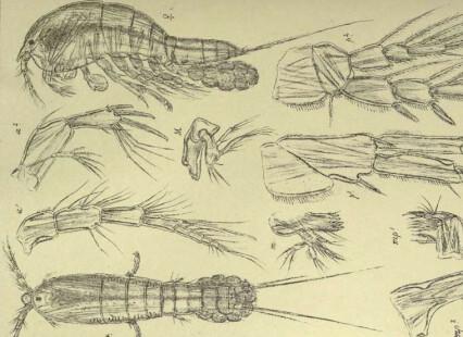 100 år gamle tegninger er fortsatt viktige verktøy for havforskere