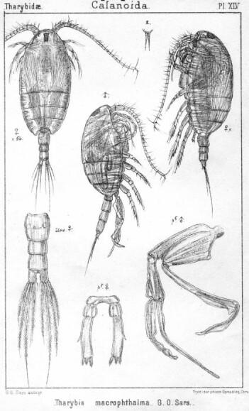 – Til tross for 100 år med internasjonal forskning på krepsdyr, regnes de fleste artene Sars beskrev for over 100 år siden fremdeles som gyldige arter, skriver Tone Falkenhaug.