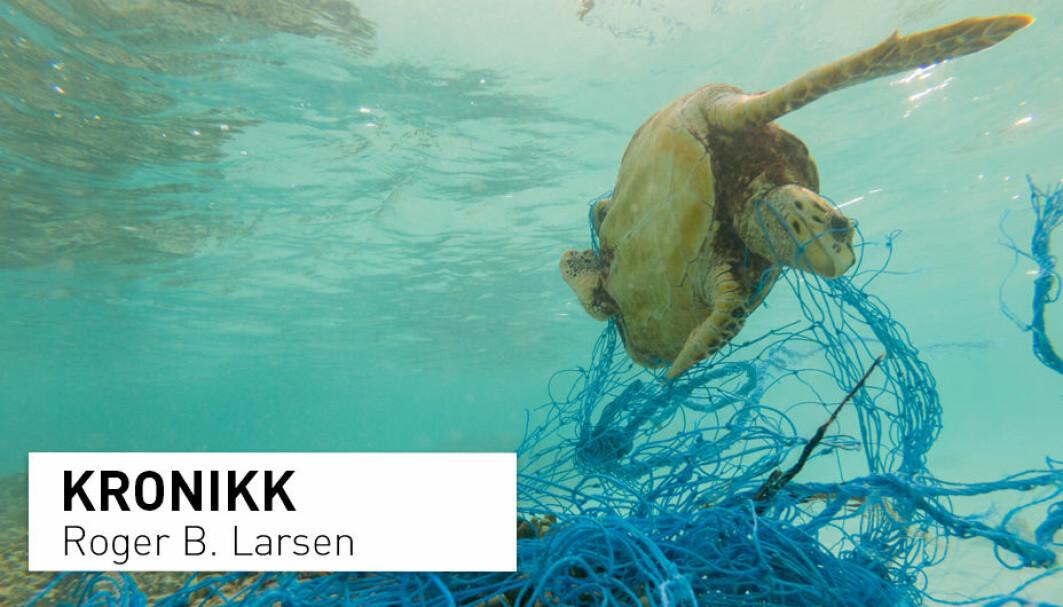 En havskilpadde sloss for livet etter å ha blitt viklet inn i et forlatt fiskegarn. Forlatt utstyr fra fiskerinæringa skaper problemer i alle verdens hav. – Vår ambisjon er å finne løsninger for at våre framtidige fiskerier i størst mulig grad anvender «smarte», bionedbrytbare materialer som vil forsvinne over en viss tid, skriver kronikkforfatteren.