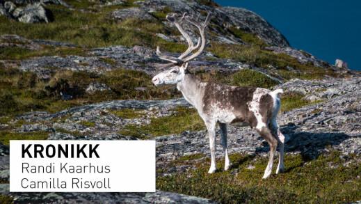 Sentrale myndigheter må anerkjenne lokalkunnskapen til reindriftsnæringa i Nordland