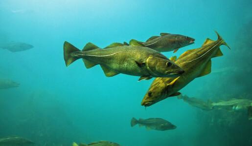 Klimaendringer påvirker hvem som spiser hvem i havet