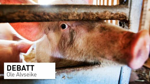 Norsk husdyrproduksjon er så trygg at vi heller burde øke enn å redusere den