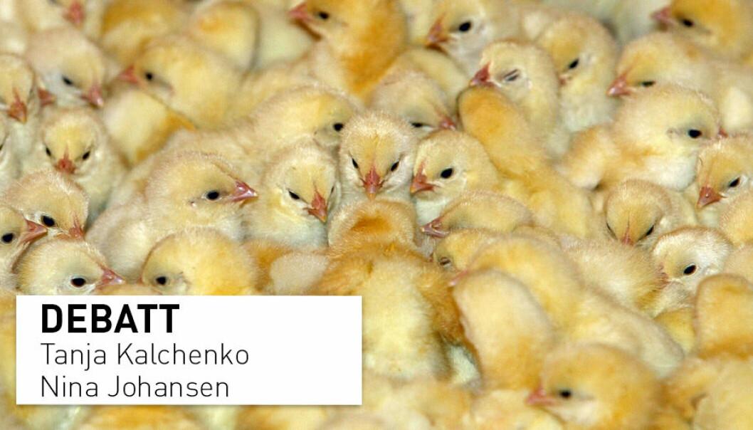 Det er ikke uten grunn at alle norske kyllinger vaksineres rutinemessig, skriver Tanja Kalchenko og Nina Johansen i Pan Norge.
