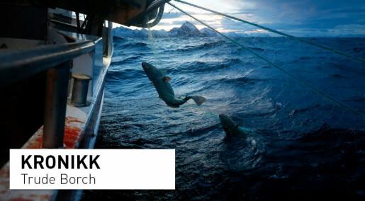 Dramatisk for norsk fiskerinæring: Skreiens lillebror er på randen av kollaps