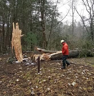 Hvordan skades norske skoger?
