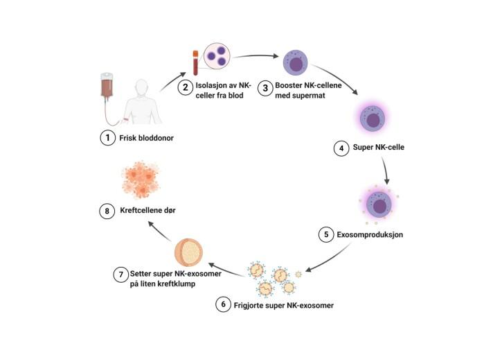 Figur 2: Hvordan vi lager super-NK-exosomer i laboratoriet: først isolerer vi NK celler fra friske bloddonorer, deretter mater de med supermat og isolerer super-NK-exosomer fra disse. Nå kan vi bruke super-NK-exosomene til å drepe 3D kreftsferoider.