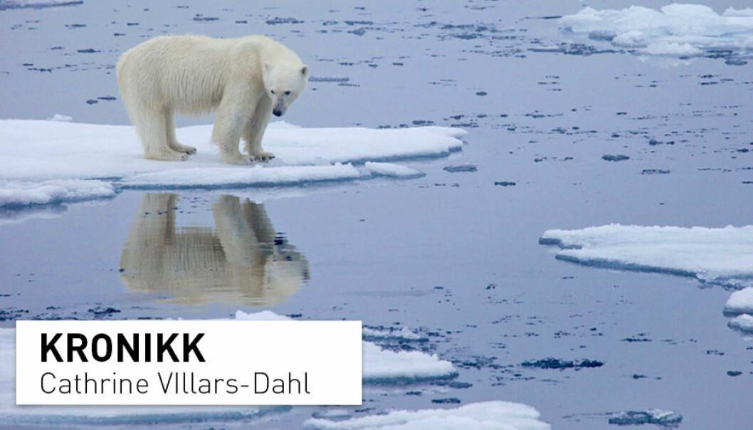 Når den arktiske isen smelter, er det ikke bare jordens globale oppvarming som vil øke, også leveforholdene i Arktis vil endres, skriver Cathrine Villars-Dahl
