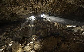 Eldgammelt bjørne-DNA er hentet ut fra jord i en grotte