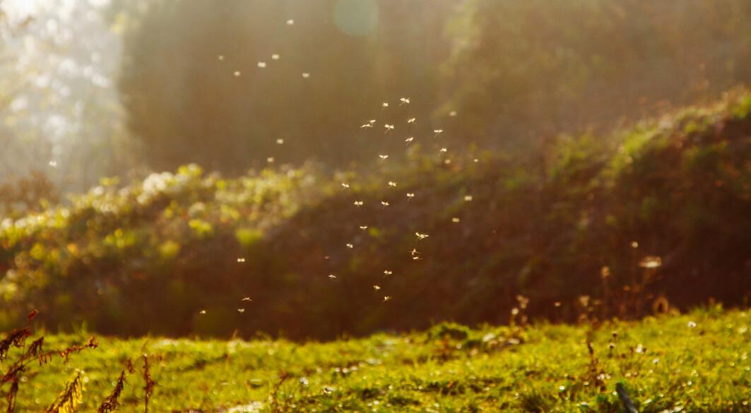 Spørsmålet om hvor den plagsomme myggen kom fra, og hvordan luftforurensning spres i Europa, har faktisk mange likhetstrekk, skriver Jan Eiof Jonson ved Meteorologisk institutt.