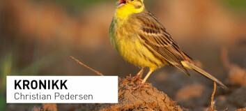Vanlige norske fugler som gulspurven er i tilbakegang