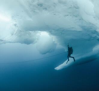 En vitenskapelig dykkers beretning om livet under vann
