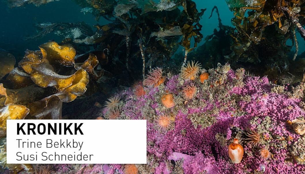 I dag er dagen for å skjenke en tanke til en art du aldri har hørt om, men som likevel er viktig, skriver forskere ved Norsk institutt for vannforskning. Her fra korallrev ved Svalbard.
