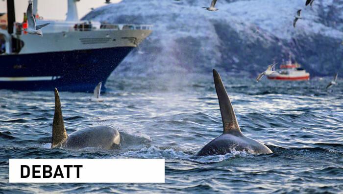 Norge er en stormakt innen havforskning – FNs tiår for havforskning må gi et ytterligere løft