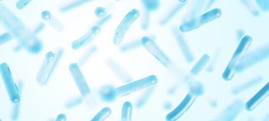 Fordelaktige probiotika kan motvirke effekten av de farlige bakteriene i havet