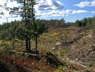 Hvordan går det egentlig med gammelskogen vår?