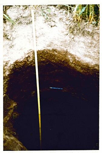 Begravd torvjordsprofil på Selsvollene med flomlag av silt av forskjellig tykkelse nedover mellom torvlagene.