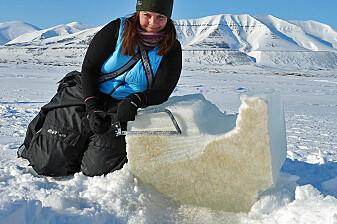 Dramatisk temperaturøkning i Arktis rammer livsviktige alger i isen