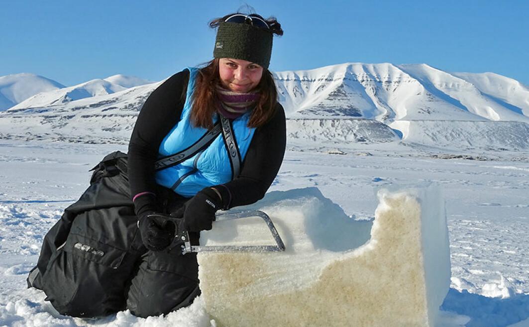 For å kunne forutsi hvordan livet i havet i Arktis vil utvikle seg, har et forskningsprosjekt studert hvordan alger og plankton påvirkes av temperaturforandringer. Her ser vi doktorgradskandidat Ane Cecilie Kvernvik med en isblokk full av isalger i Van Mijenfjorden på Svalbard.