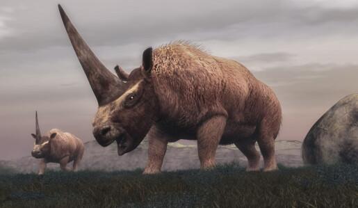 DNA-jakt ga svar: Tok menneskene eller klimaet livet av mammut og ullhåret neshorn?