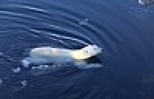 – Større havområder i Arktis må bevares
